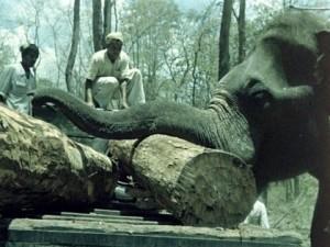 "An elephant logger in ""Matri Bhumi."""